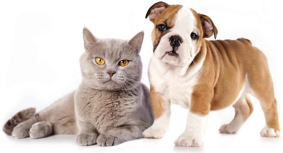 ما حیوانات خانگی را برای لذت بردن نگه می داریم.